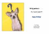 <h5>Chihuahua Question V61</h5>