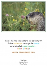 <h5>Groundhog Morning V219</h5>