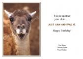 <h5>Happy Lama V59</h5>