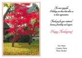 <h5>Red Tree V278</h5>