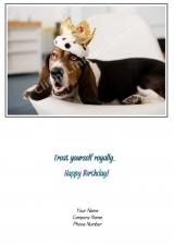 <h5>The Dog Prince V70</h5>